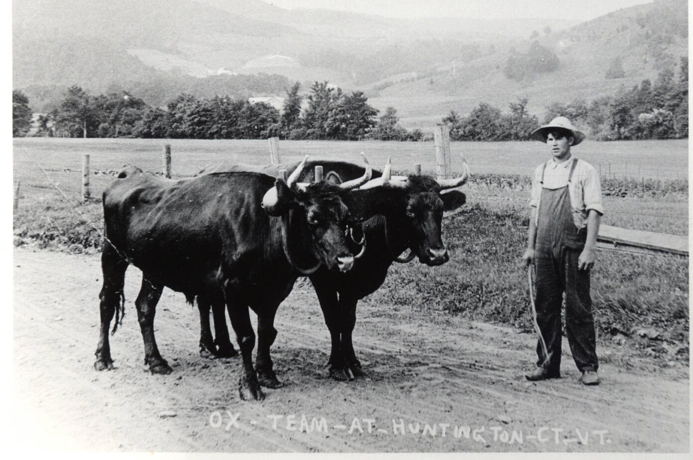 Boy with Oxen
